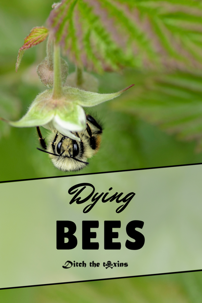 Dying Bee Population